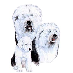 Old English Sheepdog T-Shirt - Best Friends