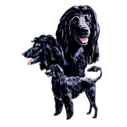Portuguese Water Dog T-Shirt - Best Friends