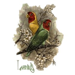 Lovebirds T-Shirt - Perched