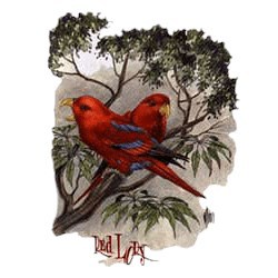 Red Lory Parrot T-Shirt - Perched