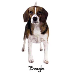 Beagle T-Shirt - Perfectly Portrayed