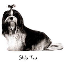 Shih Tzu T-Shirt - Perfectly Portrayed