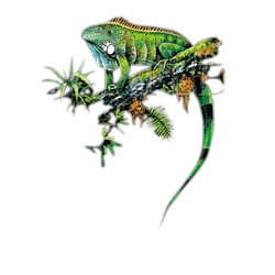 Iguanas T-Shirt - Colorful and Detailed