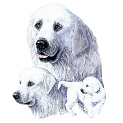 Great Pyrenees T-Shirt - Best Friends