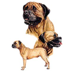 Bullmastiff T-Shirt - Best Friends