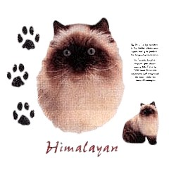 Himalayan Cat T-Shirt - Facts