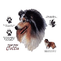 Collie T-Shirt - History Collection