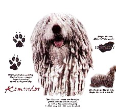 Komondor T-Shirt - History Collection