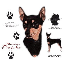 Miniature Pinscher T-Shirt - History Collection