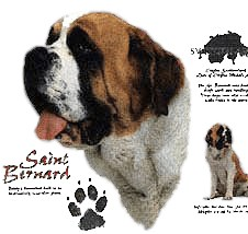 Saint Bernard T-Shirt - History Collection