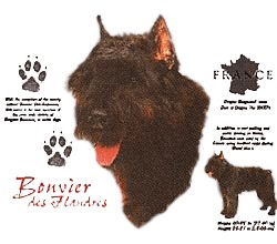 Bouvier des Flandres T-Shirt - History Collection
