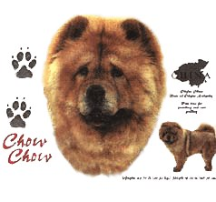 Chow Chow T-Shirt - History Collection