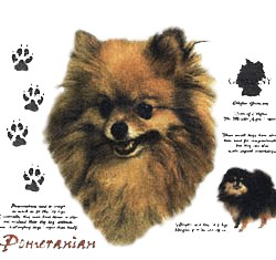 Pomeranian T-Shirt - History Collection