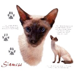 Siamese Cat T-Shirt - Facts