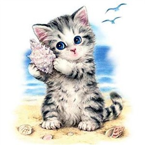 Kitten T-Shirt - Seashell