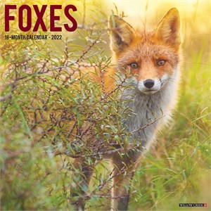  Foxes Calendar 2013