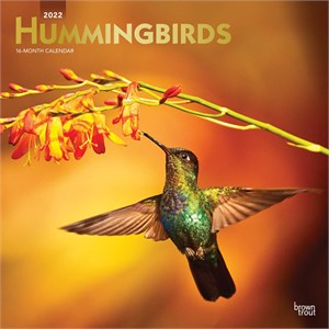 Hummingbirds Calendar 2013