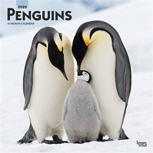 Penguins Calendar 2013