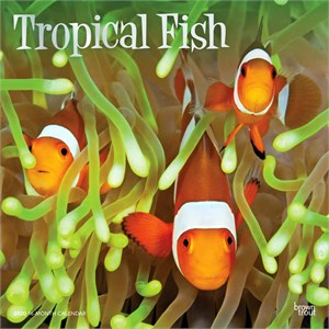 Tropical Fish Calendar 2013