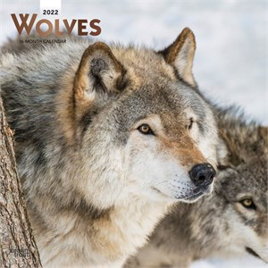  Wolves Calendar 2013