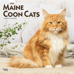 Maine Coon Cats Calendar 2014