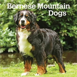 Bernese Mountain Dogs Calendar 2013