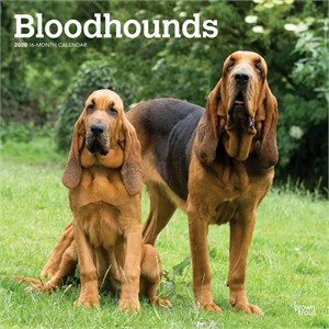 Bloodhounds Calendar 2013