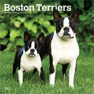 Boston Terriers Calendar 2013