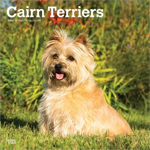  Cairn Terriers Calendar 2013