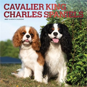  Cavalier King Charles Spaniels Calendar 2013