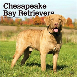  Chesapeake Bay Retrievers Calendar 2013