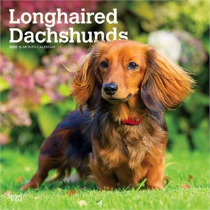 Longhaired Dachshunds Calendar 2014