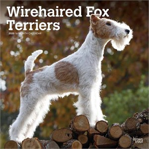Wire Fox Terriers Calendar 2014