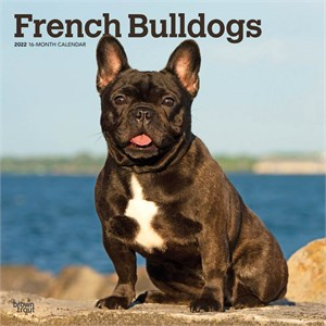 French Bulldogs Calendar 2013