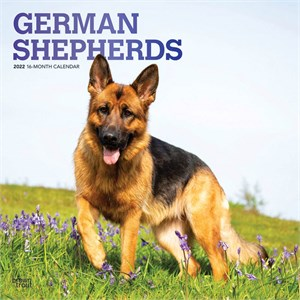  German Shepherds Calendar 2013