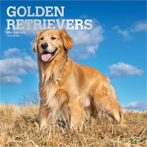 Golden Retrievers Calendar 2013