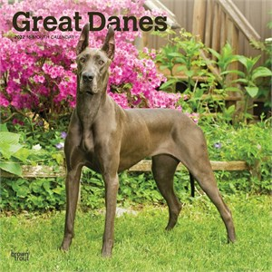  Great Danes Calendar 2013