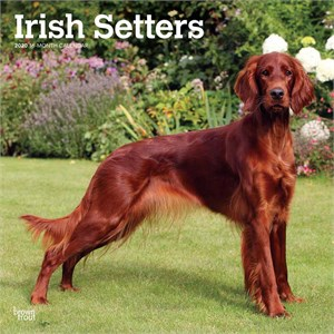  Irish Setters Calendar 2013
