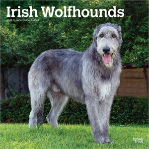Irish Wolfhounds Calendar 2013