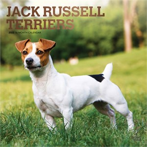 Jack Russell Terriers Calendar 2013