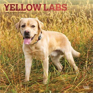Yellow Labrador Retrievers Calendar 2013