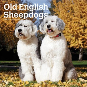  Old English Sheepdogs Calendar 2013