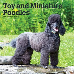  Toy and Miniature Poodles Calendar 2013