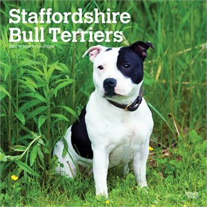 Staffordshire Bull Terriers Calendar 2013