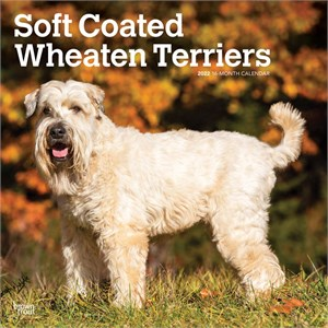 Soft Coated Wheaten Terriers Calendar 2013