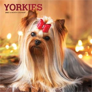  Yorkshire Terriers Calendar 2013