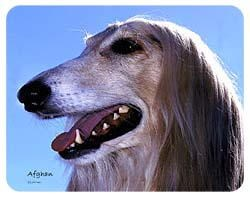 Afghan Hound Coasters