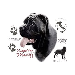 Neapolitan Mastiff T-Shirt - History Collection