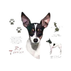 Rat Terrier T-Shirt - History Collection