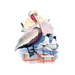 Pelican T-Shirt - Sand and Surf